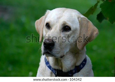 Portrait of a very hungry drooling dog :) - stock photo