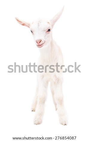 Portrait of a white little goat in full length isolated on white background - stock photo
