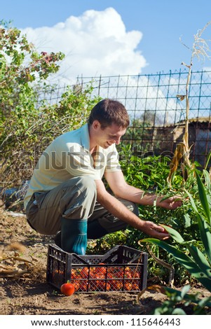Portrait of a young man picking tomatoes on a farm - stock photo