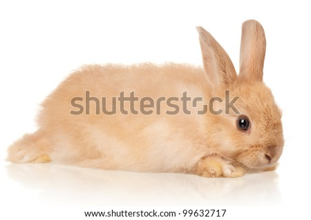 Portrait of adorable rabbit over white background - stock photo