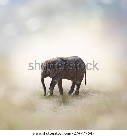 Portrait Of African Baby Elephant - stock photo