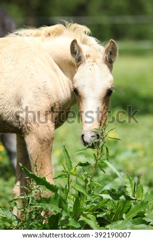 Portrait of amazing palomino foal standing on pasturage - stock photo