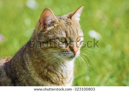 Portrait of an Outbred Cat Againsy the Green Background - stock photo