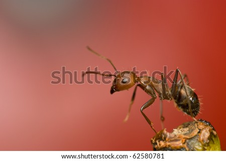 Portrait of ant - stock photo