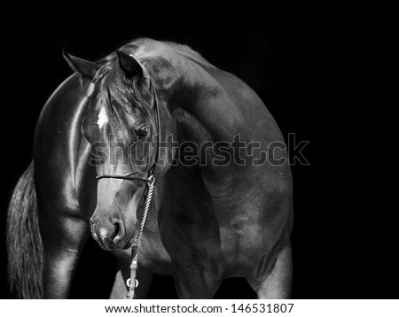 portrait of arabian horse at black background - stock photo
