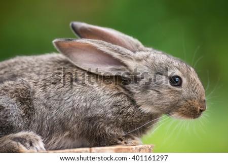 Portrait of beautiful easter rabbit baby bunny agaist green bokeh background.  - stock photo