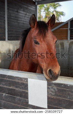 Portrait of beautiful horse who is stand in a stable - stock photo