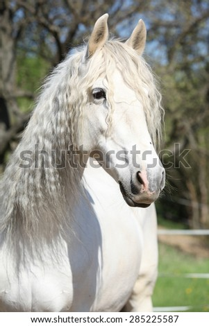 Portrait of beautiful white andalusian mare in spring - stock photo