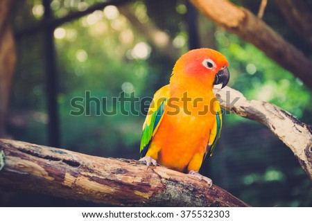 Portrait of blue-green-and-yellow amazon's parrot - in dark and warm tone. - stock photo
