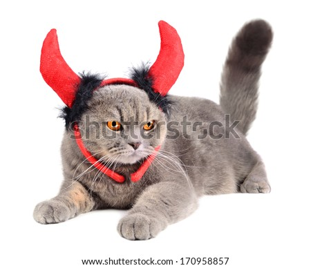 Portrait of British gray cat wearing a devil costume on white background - stock photo