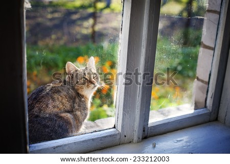 Portrait of cat  against beautiful summer nature  landscape and window - stock photo