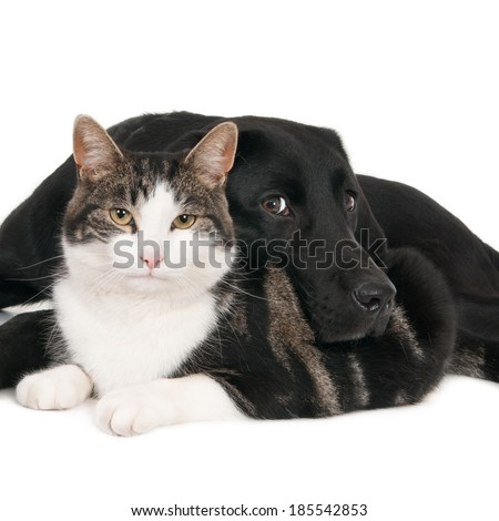 Portrait of cat and dog lying together, isolated on white - stock photo
