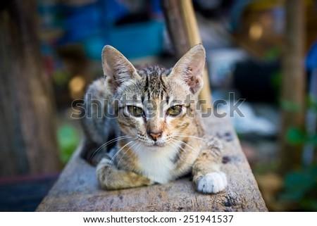 Portrait of cat. kitten - stock photo
