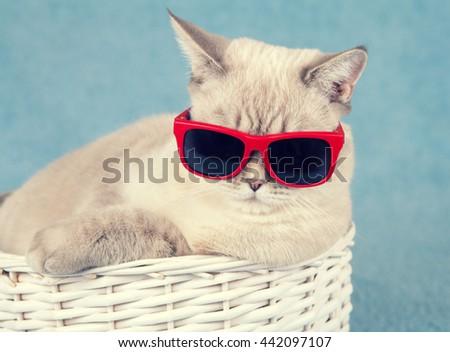 Portrait of cat wearing sunglasses - stock photo