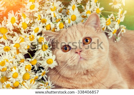 Portrait of cat with flowers - stock photo