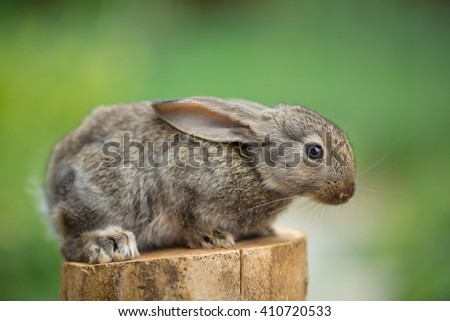 Portrait of cute baby rabbit bunny on stud agaist green bokeh background - stock photo