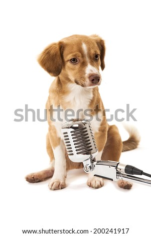 Portrait of cute dog in front of vintage microphone over white background - stock photo