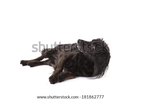 Portrait of cute mixed breed dog - stock photo