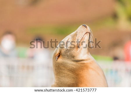 Portrait of cute Sea lion sleeping in nature. - stock photo