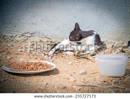 Portrait of dirty stray feral cat outdoors. - stock photo