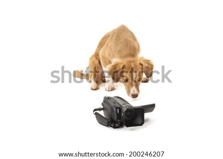 Portrait of dog looking at camcorder isolated over white background - stock photo
