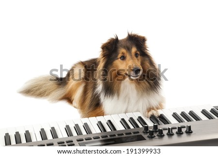 Portrait of dog playing music on piano over white background - stock photo