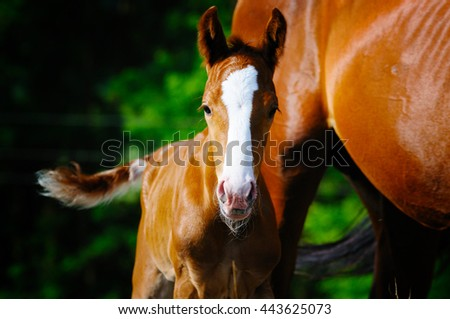 Portrait of foal near his mother - stock photo