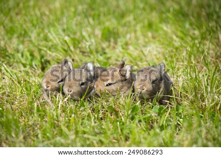 Portrait of four rabbits in the grass - stock photo