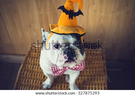 Portrait of French bulldog with hat halloween - stock photo