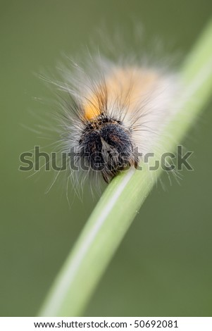 Portrait of hairy caterpillar in green background - stock photo