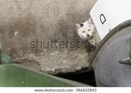 Portrait of homeless, shabby, dirty, stray cat, peeking behind thrown cardboard boxes in the filthy garbage container looking at the camera- photographed in a small downtown alley - stock photo