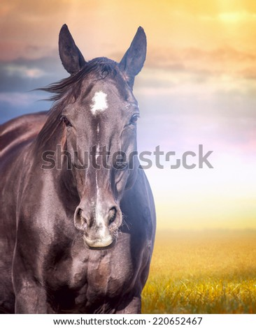 Portrait of  horse in autumn landscape at sunset  - stock photo