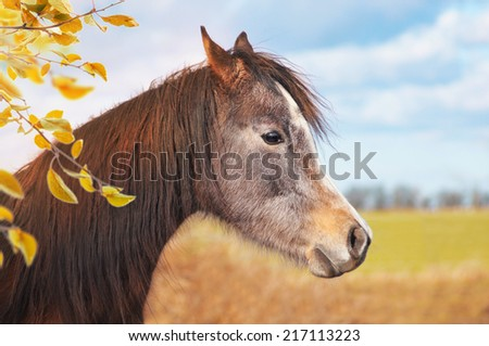 Portrait of horse on background of autumn pasture and branches with yellow leaves  - stock photo