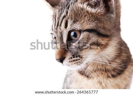 Portrait of kitten isolated on white - stock photo