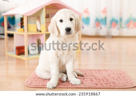 Portrait of labrador retriever puppy sitting on the floor - stock photo