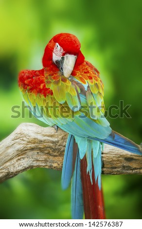 Portrait of Macaw in nature background - stock photo