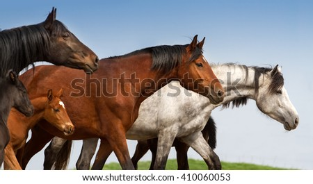 Portrait of mares and foals on studfarm pasture - stock photo