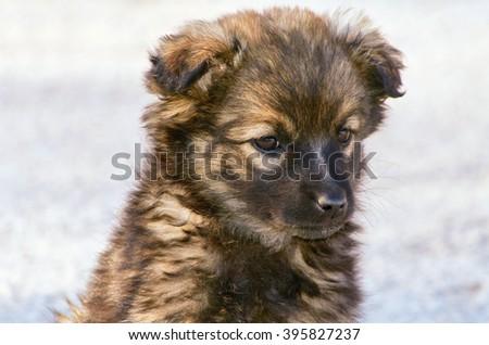 Portrait of Mongrel Puppy - stock photo