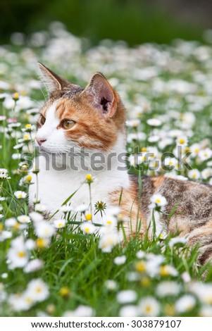 Portrait of nice cat - stock photo