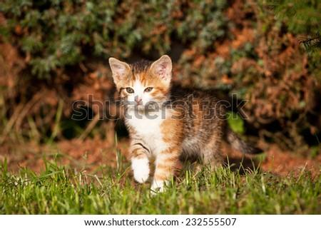 Portrait of nice kitten - stock photo