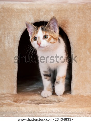 Portrait of nice kitten - stock photo