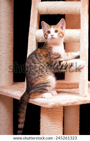 Portrait of nice kitten on black background - stock photo