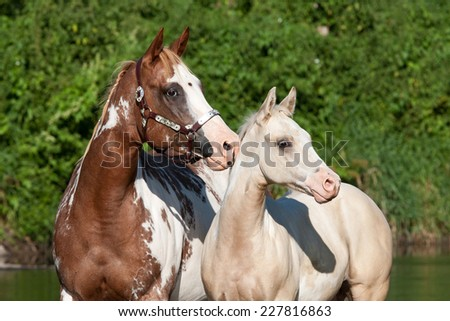 Portrait of nice paint horses - stock photo
