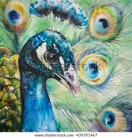 Portrait of peacock.Picture created with watercolors. - stock photo