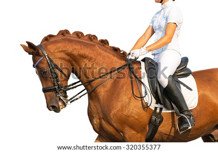 Portrait of red dressage horse on white background. - stock photo