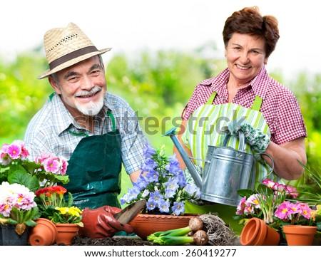 Portrait of senior couple in the flower garden - stock photo