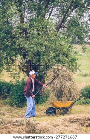 Portrait of senior man filling wheelbarrow of hay with pitchfork on a field - stock photo