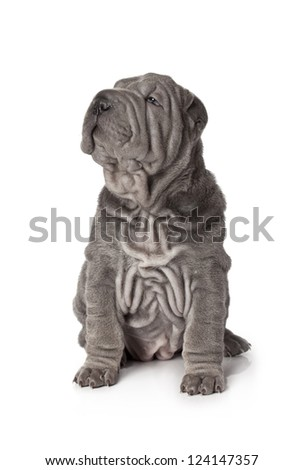 Portrait of sharpei puppy dog against white background - stock photo