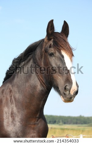 Portrait of shire horse on sky background - stock photo