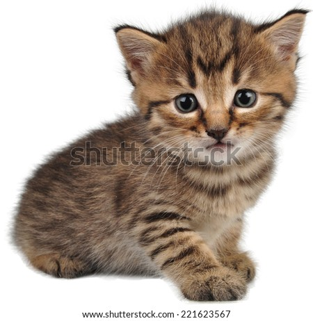 Portrait of small kitten looking at camera. Isolated on white background - stock photo